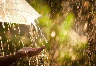 Chegada da primavera: saiba o que esperar da estação que marca o retorno das chuvas